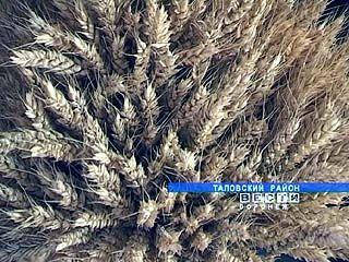 Таловские ученые представили в Москве новые сорта зерновых культур