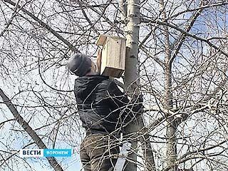 """Три сотни """"птичьих домиков"""" появятся в Воронеже"""