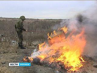 Три тысячи кустов опийного мака сожгли воронежские наркополицейские