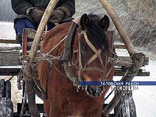 Целый год длятся разбирательства наезда лошади на автомобиль