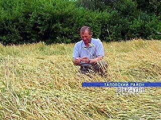 Цены на солярку стремительно растут, а зерно становится дешевле