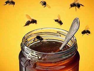 Цветущее воронежское разнотравье дарит радость любителям меда