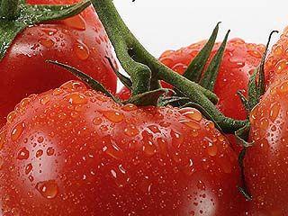 Турецкие помидоры снова попадут на столы воронежцев