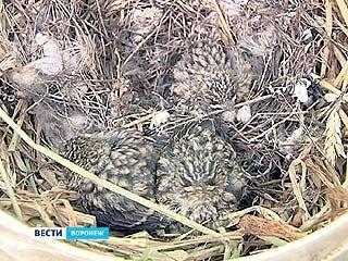 У ворот Воронежского зоопарка сотрудники обнаружили гнездо с птенцами