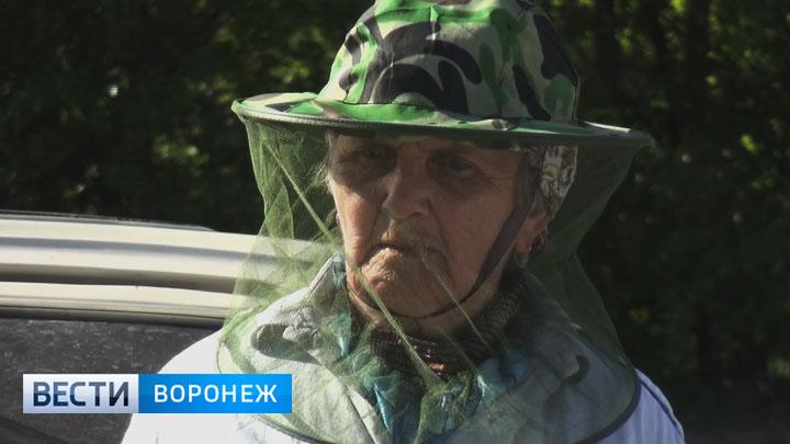 В Придонье нашествие комаров тянет на сюжет для фильма ужасов