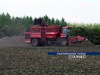 Уборка сахарной свёклы в Воронежской области в этом году затянется