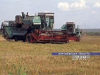 Уборку зерновых в Воронежской области остановили из-за прошедших дождей