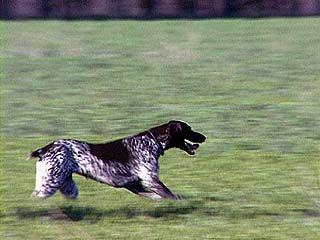 В Борисоглебске самые лучшие служебные собаки