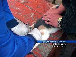 В Бутурлиновском районе зафиксирован случай заболевания бешенством