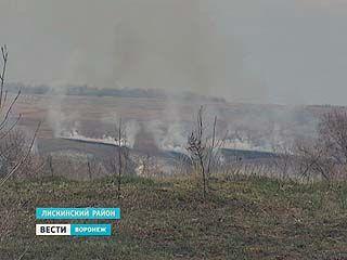 В Дивногорье пожар уничтожил редкие виды растений на площади в десять гектаров