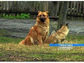 В Грибановке отстреливают собак