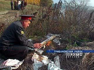 В Грибановском районе уничтожена целая плантация конопли
