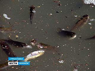 В Грибановском районе зафиксирован массовый замор рыбы
