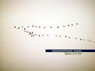 В Хопёрском заповеднике стартует осенний подсчет журавлей