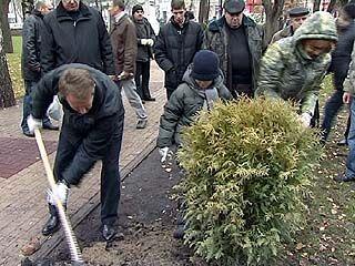 В Кольцовском сквере Воронежа появились 50 саженцев кустарников