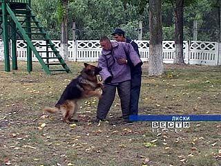 В Лисках выбрали лучшего пса в погонах
