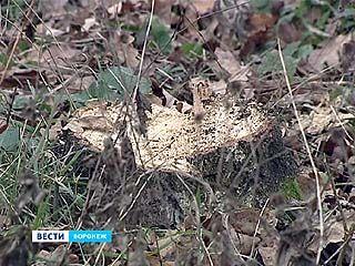 В микрорайоне Дубрава жители помешали вырубке деревьев