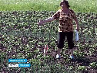 В Нововоронеже разгорается земельный скандал