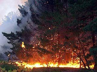 В области началась вторая волна лесных пожаров
