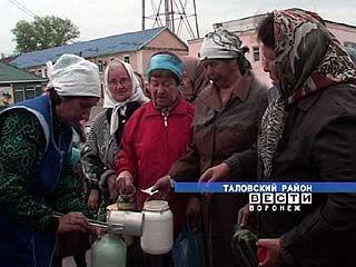 В одном из хозяйств Таловского района молоко продают без посредников