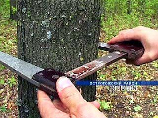 В Острогожском районе сохранились реликтовые дубовые лесополосы