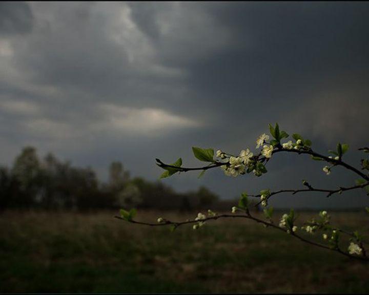 В отдельных районах Воронежской области ожидаются ливни, грозы и град