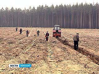 В память о воинах, погибших в боях за Воронеж, появится лес