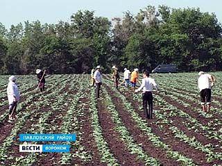 В Павловский район прибыли первые жители Республики Ингушетия