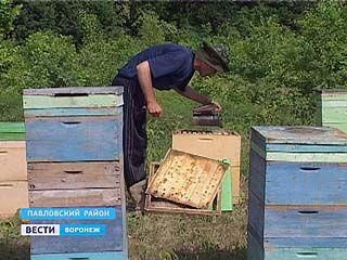 В Павловском районе развернулась война между пчеловодами