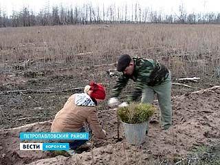 В Петропавловском районе восстанавливают сгоревший лес