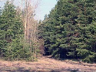 В Петропавловском районе возрождают лес