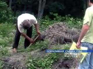 В Поворинском районе три года велась незаконная вырубка леса