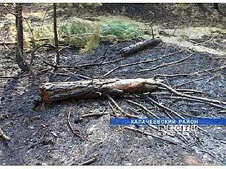 В пригороде Калача загорелся сосновый массив