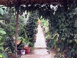 В Россошанской теплице круглый год тропики