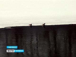 В самом центре Павловска неожиданно образовалось заповедное озеро