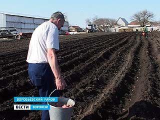 В селе Солонцы Воробьёвского района радуются неурожаям картофеля