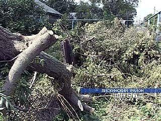В семи районах Воронежской области ликвидируют последствия урагана