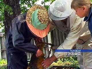 В Таловском районе появились совсем молодые пчеловоды
