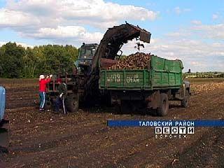 В Таловском районе приступили к уборке сахарной свеклы