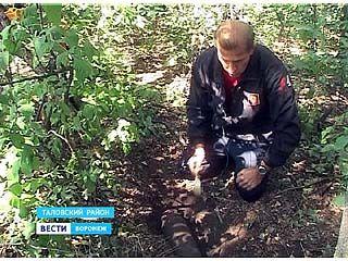 В Таловском районе продолжают находить снаряды с разбившегося бомбардировщика