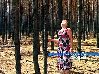 В Таловском районе уничтожен большой сосновый массив