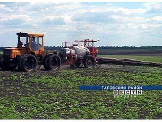 В Таловском районе ураган загубил почти треть посевов сахарной свеклы