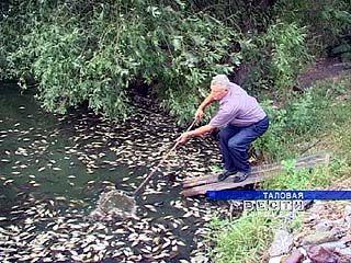В Таловском районе зафиксирована массовая гибель рыбы