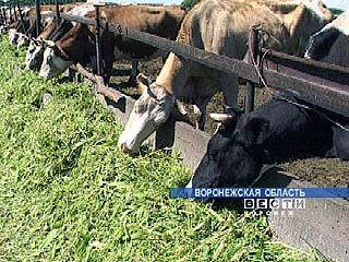 В Терновском районе обсудят повышение эффективности животноводства