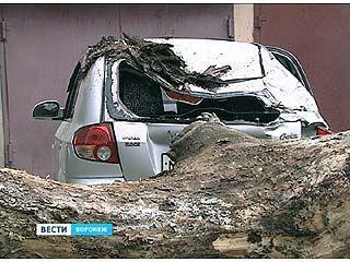В центре Воронежа на машину упало гнилое дерево