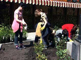 В центре Воронежа появилась аллея роз