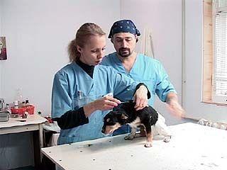 """В ветеринарном госпитале """"Друзья"""" делают операции бездомным животным"""