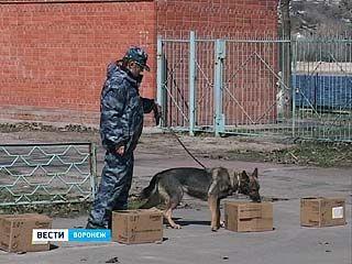 В Воронеже начались двухдневные соревнования таможенных кинологических служб