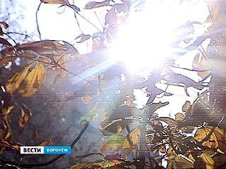 В Воронеже побит новый температурный рекорд