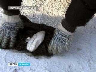 В Воронеже поймали группу наркодиллеров с крупной партией амфетамина